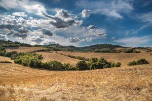 quanto terreno serve per diventare imprenditore agricolo