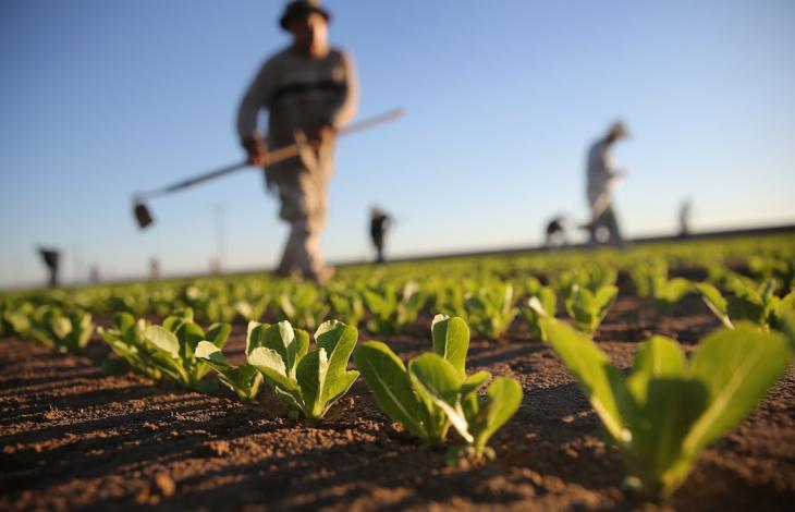 aprire azienda agricola da zero