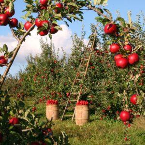 consulenza agricola