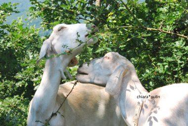 misurare la qualità del latte
